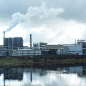 Environmental Plant